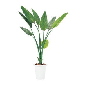 (オフィスグリーン)ストレチア 人工植物 (国産) G-S|economy