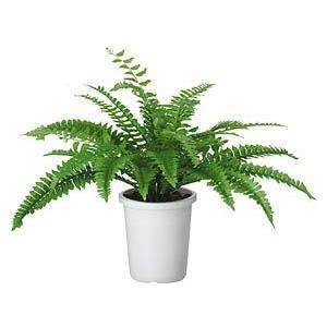 コクヨ 人工植物〈アイレストグリーン〉 ボストンファーン PX-G8830|economy