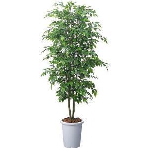 コクヨ 人工植物〈アイレストグリーン〉 ベンジャミンニチイダ PX-GBD18|economy