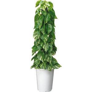 コクヨ 人工植物〈アイレストグリーン〉 ポトスポール 高さ750mm PX-GPHT103|economy