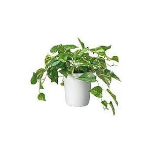 コクヨ 人工植物〈アイレストグリーン〉 ポトスクラスター PX-GPT601|economy