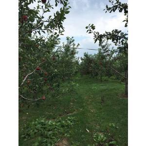 【予約注文品!TPP対策に最適!植物100%だから安心!】GREXバイオ肥料業務用100kg(5反歩分)|ecorex|05