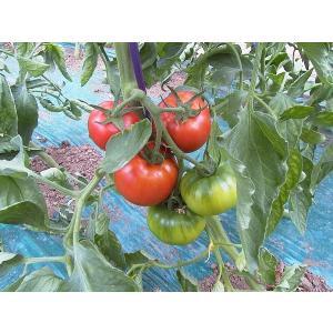 【予約注文品!TPP対策に最適!植物100%だから安心!】GREXバイオ肥料業務用100kg(5反歩分)|ecorex|07