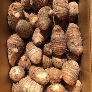 【とろける!伝統の大和野菜!】奈良県天理市産GREXの里芋【味間芋】2L特選 1kg|ecorex