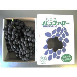 幻のブドウ8月上旬限定販売!北海道余市町産GREXのぶどう「バッファロー」1kg×2箱|ecorex|02