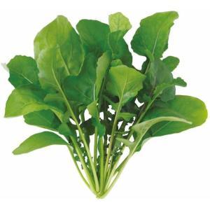 ユーイング Green Farm用種子(ルッコラ) UH-BC02 [UHBC02]