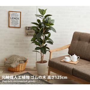 観葉植物 ゴムの木 ゴム rubber 室内 tree rubbertree