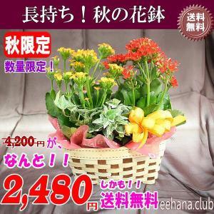 秋限定 とっても長持ち秋の花鉢がなんと 2,480円 送料無料|eehana