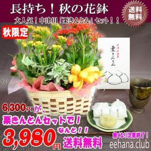 中津川 栗きんとん  +花鉢セットでなんと 3,980円 送料無料|eehana