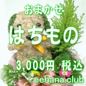 おまかせ鉢物 はちもの・花鉢・グループプランツ3,000円  お祝い・お供え・ビジネス|eehana