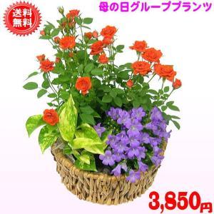 母の日 2021 花 ギフト 母の日 グループプランツエンジェル3,850円 送料無料 eehana