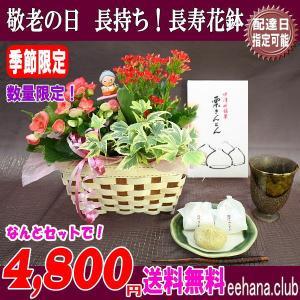 あすつく対応!売れてます!秋限定 中津川 栗きんとん  +花鉢セットでなんと 4,480円 送料無料|eehana
