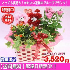 母の日 花 ギフト はちものマミーバスケット2,980円 送料無料   プードルピック選択可能|eehana