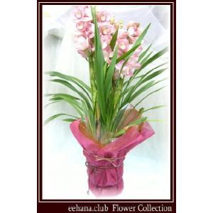 シンピジューム 豪華 高級感のあるお花 ハレルヤ  8,500円 お歳暮新年のご挨拶対応|eehana