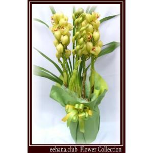 シンピジューム 豪華 高級感のあるお花 ユーフォカラー  8,000円 お歳暮新年のご挨拶対応|eehana