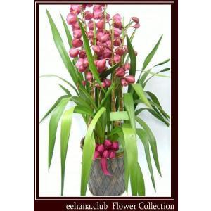 シンピジューム 豪華 高級感のあるお花 ラッキーグロリア  8,500円 お歳暮新年のご挨拶対応|eehana