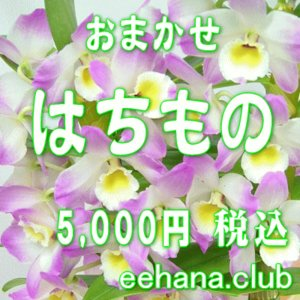 おまかせ鉢物 はちもの・花鉢・グループプランツ5,000円  お祝い・お供え・ビジネス|eehana