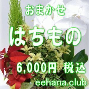おまかせ鉢物 はちもの・花鉢・グループプランツ6,000円  お祝い・お供え・ビジネス|eehana