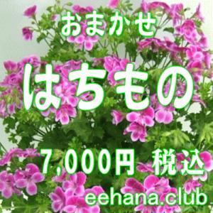 おまかせ鉢物 はちもの・花鉢・グループプランツ7,000円  お祝い・お供え・ビジネス|eehana
