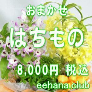 おまかせ鉢物 はちもの・花鉢・グループプランツ8,000円  お祝い・お供え・ビジネス|eehana