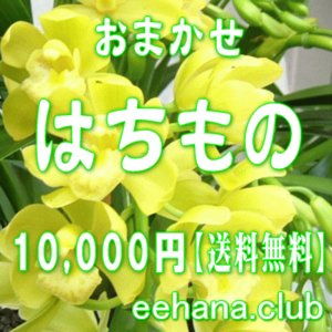 おまかせ鉢物 はちもの・花鉢・グループプランツ10,000円 送料無料   お祝い・お供え・ビジネス|eehana