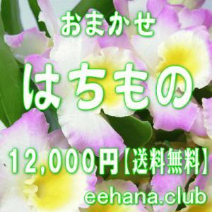 おまかせ鉢物 はちもの・花鉢・グループプランツ12,000円 送料無料   お祝い・お供え・ビジネス|eehana