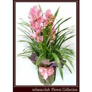 シンピジューム 豪華 高級感のあるお花 ラッキーレインボー  8,500円 お歳暮新年のご挨拶対応|eehana