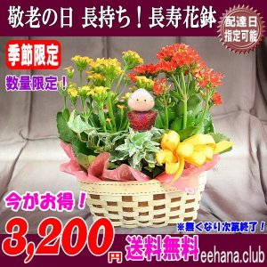 あすつく対応OK!敬老の日 大人気! とっても長持ち花鉢がなんと 3,200円 送料無料|eehana