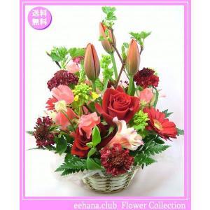 花 ギフト バースデー2月の誕生花チューリップレッドアレンジ3,800円 送料無料  花言葉付き チューリップ   あす楽対応|eehana