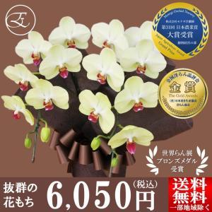 イエローグリーンのミディ胡蝶蘭 「フォーチュン・ザルツマン」 花もちNO,1品種です! 環境の変化に...