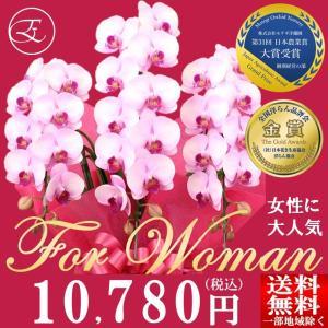 可愛らしいピンクのミディ胡蝶蘭は女性の方への贈り物に最適です。  高さ:約58cm 幅:約35cm ...