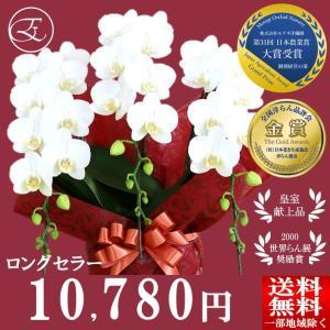 清楚で気品のある白い胡蝶蘭は年齢性別問わず幅広い方から愛されています。  高さ:約58cm 幅:約3...