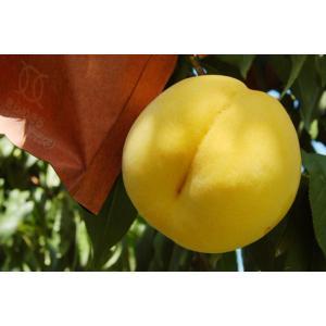 福島 しあわせの黄色い桃 2kg 5〜8玉  もも 畑から直送 |egao-fukushima