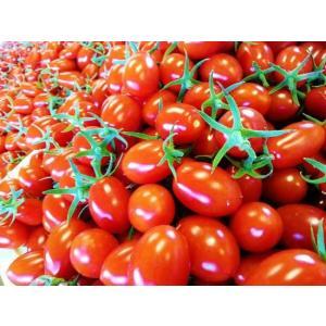 あまみの強いフルーツトマト 甚右衛門 アイコトマト たっぷり 3kg|egao-fukushima