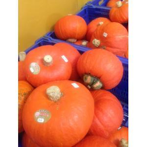 驚きのおいしさ! 奥会津 金山 赤かぼちゃ 2玉入 数量限定 カボチャ 金山町産|egao-fukushima