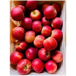 【家庭用 小玉】 りんご名人のサンふじりんご 5kg(20玉入) 家庭用|egao-fukushima