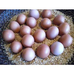 会津 平飼い自然卵  娘のための卵 10個入×2パック|egao-fukushima