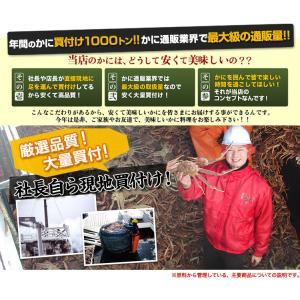 かに カニ 蟹 ズワイガニ ボイル | 大型4Lボイルずわいがに肩脚 7〜8肩(約2.5kg)【送料無料】|egaotakumi|02