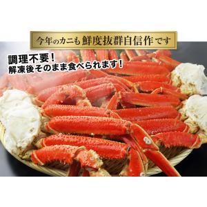 かに カニ 蟹 ズワイガニ ボイル | 大型4Lボイルずわいがに肩脚 7〜8肩(約2.5kg)【送料無料】|egaotakumi|03
