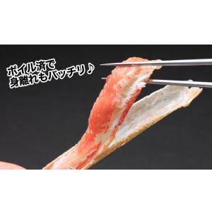 [かに カニ 蟹 ズワイ ずわい ズワイ蟹 ずわい蟹 ずわいがに]特大6Lボイル本ずわいがに肩脚 7肩(約3kg)【送料無料】|egaotakumi|04