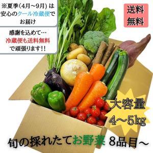 野菜セット 詰め合わせ 4kg〜5kg 大容量 クール便 送料無料 新鮮採れ立て 8品目以上 eight-shop