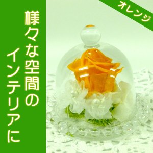 プリザ(ガラスドームオレンジ)ギフトにおすすめプリザーブドフラワー(お手入れ簡単)とてもキュートです|ekoukai