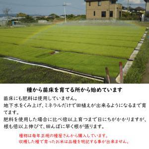 無肥料栽培 発芽前玄米2Kg | 無農薬 福岡県産 ゆめつくし 0.5分づき米|ekubo|13