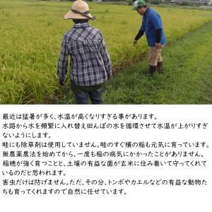 無肥料栽培 発芽前玄米2Kg | 無農薬 福岡県産 ひのひかり 0.5分づき米|ekubo|15