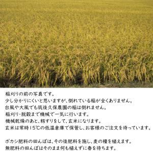 無肥料栽培 発芽前玄米2Kg | 無農薬 福岡県産 ゆめつくし 0.5分づき米|ekubo|16