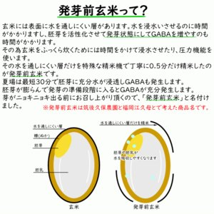 無肥料栽培 発芽前玄米2Kg | 無農薬 福岡県産 ひのひかり 0.5分づき米|ekubo|04