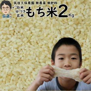無肥料栽培 もち米 2Kg   無農薬 福岡県産 ひよくもち 筑後久保農園 ekubo