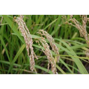 送料無料●国内産 精米 白米 10kg●認定農業者生産品 elelerueru