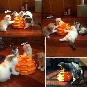 送料無料 新品●箱無し 猫のおもちゃ ボールディスク アミューズメントプレート●ペット用品 愛猫 ねこのおもちゃ|elelerueru