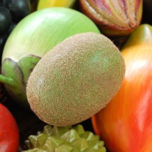キウィフルーツはマタタビ科の落葉蔓性植物で果実が鳥のキーウィに似ていることから名前が付いたとも言われ...